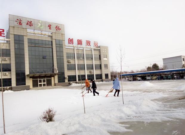 第一场雪,山东洁保