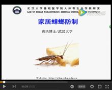专家讲解蟑螂如何综合防治