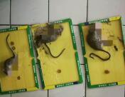 鼠板效果反馈